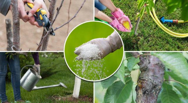 услуги садовника обрезка деревьев