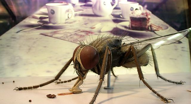 Как избавиться от насекомых